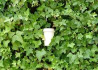 Disposable Compostable Paper Cups Corn / Sugarcane Based Custom Size For Hot Drink